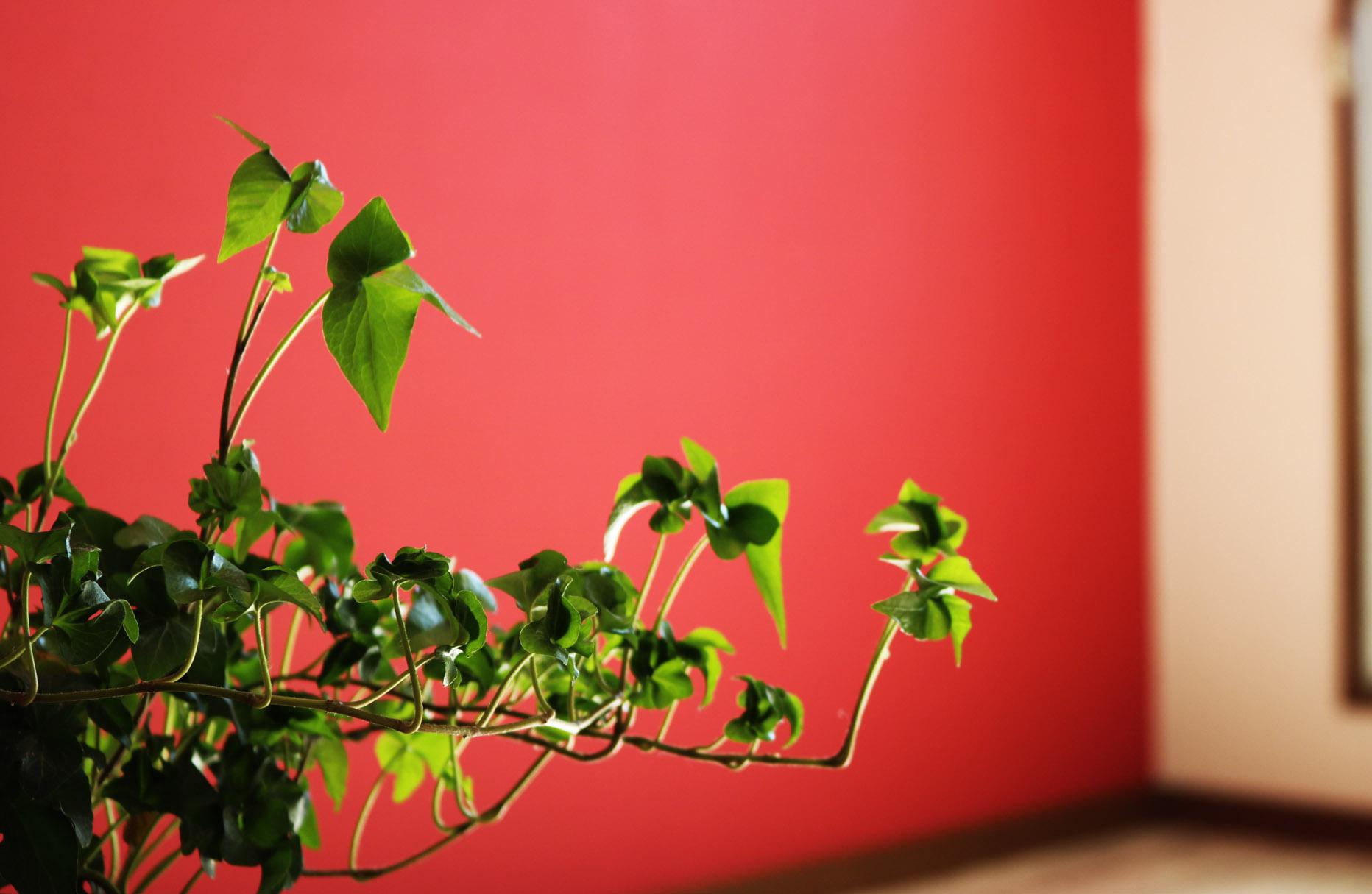 【成約済】目の覚めるような赤の部屋 #405